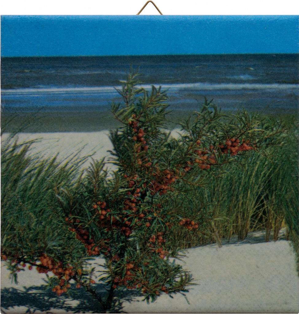 Sanddorn am Strand